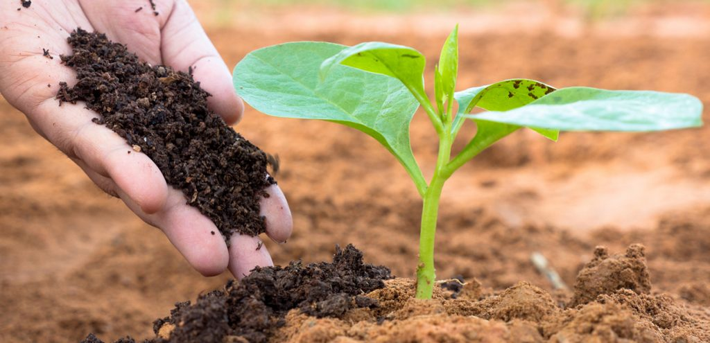 entretenir gazon avec du fertilisant